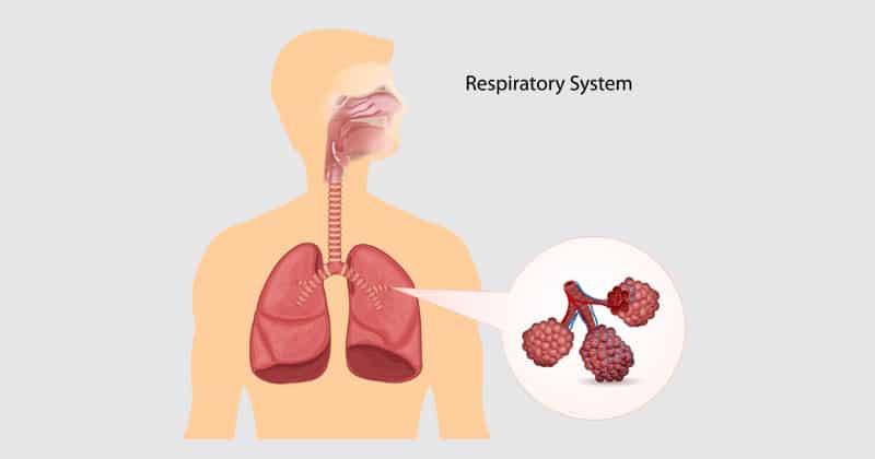 ระบบหายใจ